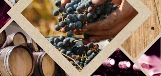 החלה ההרשמה לקורסי בציר 2016 - שורק בית ספר לעשיית יין
