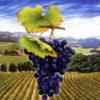 ענבי היין