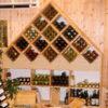 אכסון יין בשכיבה